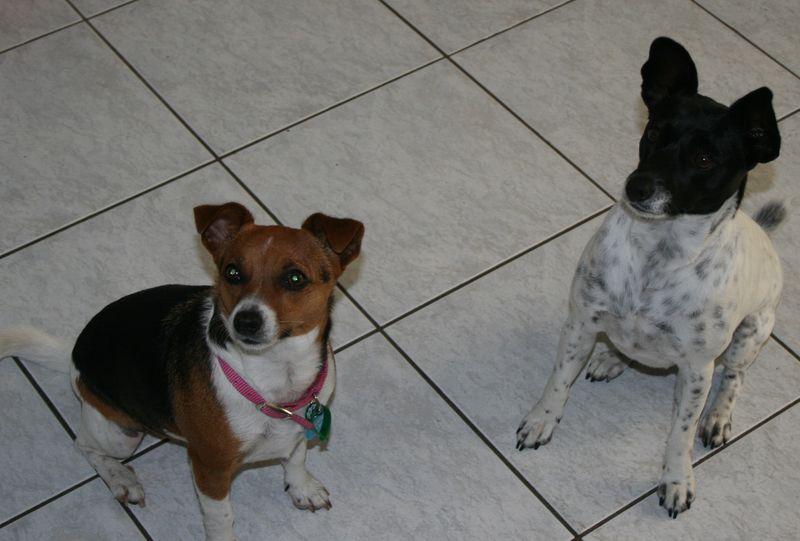 Tara and Misty